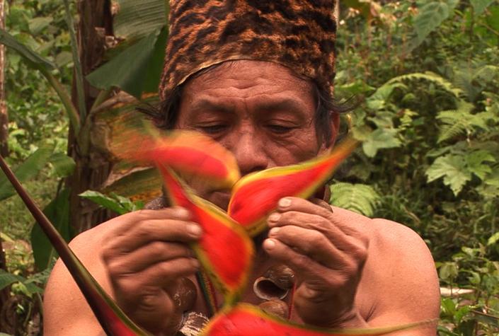 Trans-Cutucú - Zurück in den Urwald